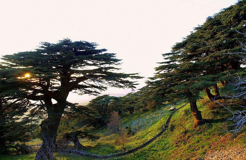 Deir el Qamar, Beiteddine & Al Shouf Cedar Reserve – 7 hrs
